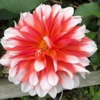 紫钗记之花园盟心在线听(原唱是华语群星),演唱点播:651次